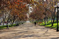 Parque Los Reyes 2, Santiago de Chile (Mario Rivera Cayupi) Tags: tree park grass people resting leisure color otoño autumn árboles parque caminata walking descanso paseo canon80d santiagodechile sigmaart sigma1835mmf18art
