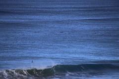 IMG_3677 (gervo1865_2 - LJ Gervasoni) Tags: surfing with whales lady bay warrnambool victoria 2017 ocean sea water waves coast coastal marine wildlife sealife blue photographerljgervasoni