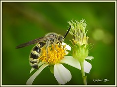 Yellow Jacket (todd5524) Tags: bee macro close amazing colors colorful outdoors beauty beautiful nikon photography photoshop