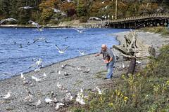 (axiepics) Tags: lagoon esquimaltlagoon birds seagulls