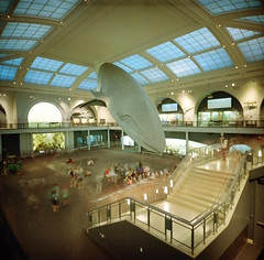 The whale at the Natural History Museum (DannyOKC) Tags: 36flix 120 analogphotography analogue analoguepeople back2thebase believeinfilm buyfilmnotmegapixels coolfilmclub deathb4digital everybodyfilm film filmfeed filmisalive filmpheature filmphotographic filmphotography filmshooter filmwins heyfsc heylomography ishootfilm istillshootfilm kodakportra400 lca120 lomo lomography mediumformat naturalhistorymuseum newyork nophotoshop onfilm photofilmy portra400 shootfilmbenice shotonfilm thefilmcom whale
