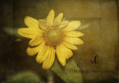 Night Smiles (Rrea Brown (Photography)) Tags: nightshots 2lilowls textures textureart digitalart flowers sunflower lensbaby lensbabymacro lensbabysweet50
