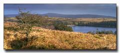 Venford-Reservoir (jeremy willcocks) Tags: venfordreservoir dartmoor devon ukjeremywillcocksc2018 moor moors tree water view hills colour sun sunny grass wwwsouthwestscenesmeuk jeremywillcocks