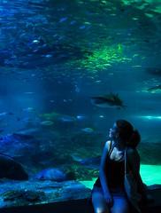 41st. (Squig O) Tags: sk stuff busan south korea sea life aquarium