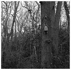 Bird House. Zeiss Ikona 523/Ilford HP5+ (Tony Joness) Tags: analogue analog bw bnw blackandwhite blackwhite develop developer dxophotolab dxo epson epsonscanner england film fomafix hp5plus hp5 harrogate ilford ilfordhp5plus monochrome mono mediumformat rodinal rollfilm scanner scan square trees tree uk v550 vintage yorkshire zeiss zeissikonikonta52316 120 120filmcamera 6x6 rivernidd birdhouse