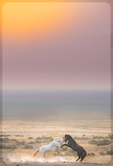 Wild Horses (Jami Bollschweiler Photography) Tags: wild horse photography utah wildlife charger bachelors foal sepia sunset band onaqui west desert