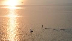 mornings on Monona (humbletree) Tags: lakemonona madisonwisconsin swimmers kayak morninglight sky ironmanwisconsin