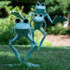 Ribbit the Exhibit 002 (billcoo) Tags: garden green travel bokeh frog michigan 6d2 frogs jumping