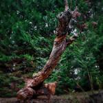 L'érection du bois mort...._DSC4105 thumbnail