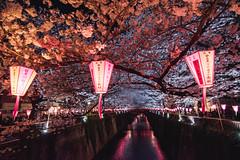 Nakameguro Sakura - Tokyo, Japan (inefekt69) Tags: japan tokyo nakameguro river lightup lanterns sakura cherry blossoms flowers nature spring hanami nikon d5500 日本 東京 さくら 桜 花見 中目黒