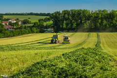 CLAAS Grass Silage (martin_king.photo) Tags: springwork springwork2018 silage silage2018 inaction action first today outdoor claasworldwide machine sky martin king photo agriculture machinery machines tschechische republik powerfull power dynastyphotography lukaskralphotocz agricultural great day czechrepublic fans work place tschechischerepublik martinkingphoto welovefarming working modern landwirtschaft colorful colors blue photogoraphy photographer canon tractor love farming daily onwheels farm skyline allclaaseverything claasfans worker claasjaguar shredlage claaspickup header claasshredlage field green red eos landscape lines trees rural