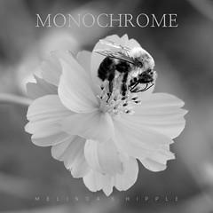 Monochrome *Explore* (bellydanser) Tags: book bookcover photobook photography monochrome blackandwhite bw collection