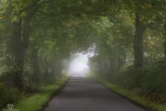 The Road Home... (CamraMan.) Tags: road mist trees autumn canon6d canon70200f4 ©davidliddle ©camraman rockliffe cumbria