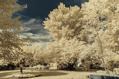 infrared in the back yard (TAC.Photography) Tags: infrared dynamicimage tomclarknet tacphotography d7000 lifepixel 2018yip nikon nikoncamera