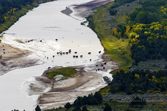 The Bison crossing!  I was hiking in the north unit of  Theodore Roosevelt national park, ND, USA and came across this spectacular view on the river bend below me. here the herd of bison drinking water and hanging out in the middle of the river bend.    # (Niroshan Mirando) Tags: srilankan earthcaptures canonusa usa exploreusa winnipegphotographer theodorerooseveltnationalpark canoncanada canon natgeo winnipeg areal wildlifephotography canada landscapephotography nd northdekota bison photography landscape