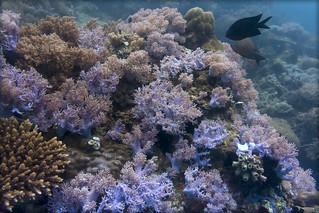 Philippines underwater view 2