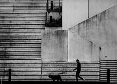 Walk the dog (MortenTellefsen) Tags: dog walk walking stairs bw blackandwhite blackandwhiteonly trapper svarthvitt bnw monochrome bergen norway norsk norwegian hund gatefoto streetphoto street streetview
