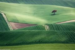 Colline verdi (SDB79) Tags: grano strada campagna colline molise ururi