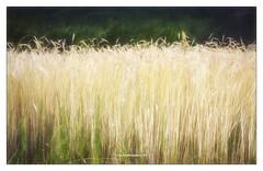 A place with no name (Un lieu sans nom) (PATRICE OUELLET) Tags: patricephotographiste impressionnisme impressionism simplicité simplicity aplacewithnoname nature unlieusansnom