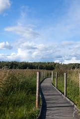 Causeway (jannaheli) Tags: suomi finland helsinki luonto nature luontovalokuvaus naturephotography nikond7200 outdoor sunnyday sunday syksy autumn arabia lammassaari pilvet clouds taivas sky bluesky pitkospuut causeway maisema landscape