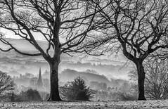 Misty Morning, Romiley 4180 B&W (Mike Thornton 15) Tags: romiley mistymorning sunrise trees mist village church