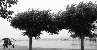 VKKT TRA • Am Skulpturenpfad • Vier, im Regen • Ilford Delta™ 100 • E X P L O R E •