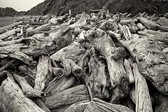 Driftwood (TheAmazingShrinkingMan) Tags: highway101 beach travelmemories