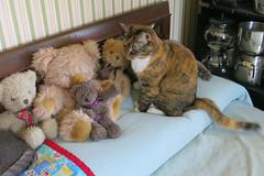 Gracie and Millie 12 July 2018 0199Ri 4x6 (edgarandron - Busy!) Tags: cat cats kitty kitties tabby tabbies cute feline