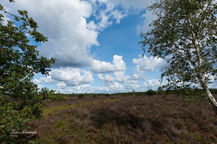 Between the trees (Leo Kramp) Tags: 2018 weer veluwe wandelen heide wolken flickr natuurfotografie bloemen gortel emst gelderland nederland nl leo kramp leokramp wwwleokrampfotografienl leokrampfotografie web websitelandschap netherlands photography events data plaatsen 2010s