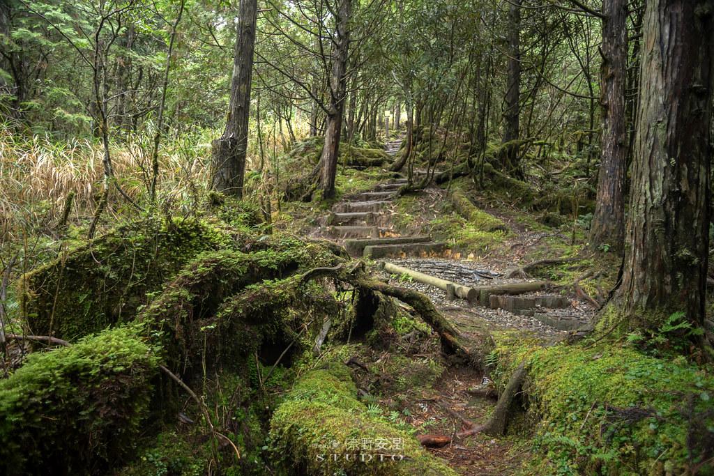 太平山翠峰湖環山步道 |走在泥濘的道路上,只為途中美景 | 宜蘭大同鄉1