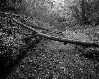 Dried Out Stream (Stanley Burn Wood)