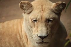 IMG_4272 (gabrielgs) Tags: holiday holiday2018 vakantie2018 camping frankrijk france zoo la fleche lafleche animals dierentuin loire