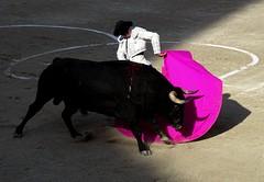 remate de Juan Del Alamo (aficion2012) Tags: arles septembre 2018 baltasar iban corrida bullfight bull toros taureau taureaux toro france francia provence juan del alamo remate capa capote capear capeando torero matador toreador dimanche domingo tauromaquia tauromachie tauromachy artofbullfighting