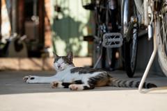 猫 (fumi*23) Tags: ilce7rm3 sony 85mm fe85mmf18 sel85f18 katze gato neko cat chat animal feline street alley bokeh a7r3 emount ねこ 猫 ソニー 路地
