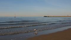 l'envol du goéland (pierre.pruvot2) Tags: france gx80 pasdecalais plagedecalais calais oiseau beach