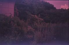(✞bens▲n) Tags: pentax lx fujichrome 50 xpro crossprocessed fa 31mm f18 limited film analogue japan yamansahi haikyo plants flowers trees