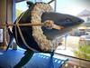 Japan Town, San Jose - Shark Roll (nervous.tick) Tags: sharknado sharks shark japantown sushi californiaroll