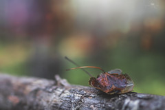 i'll shelter you (rockinmonique) Tags: afw leaves oneovertheother fence forest tree bark bokeh macro texture green orange grey moniquewphotography canon canont6s tamron tamron45mm copyright2018moniquewphotography