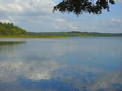 der Schaalsee bei Seedorf (Sophia-Fatima) Tags: seedorf schleswigholstein deutschland biosphärenreservatschaalsee schaalsee lake see