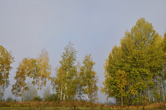 Fog / Туман (SerenitySS) Tags: осень autumn октябрь october небо sky пейзаж landscape ландшафт landschaft россия russia смоленскаяобласть smolenskregion природа nature деревья wood trees лес forest туман mist берёза betula birch