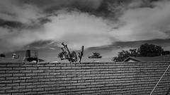 phx 00950 (m.r. nelson) Tags: phoenix arizona az america southwest usa mrnelson marknelson markinaz streetphotography urban urbanlandscape artphotography newtopographic documentaryphotography blackwhite bw monochrome blackandwhite