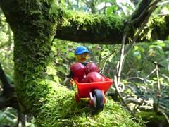 Red Berries in a red wheelbarrow (captain_joe) Tags: toy spielzeug 365toyproject lego minifigure minifig schubkarre wheelbarrow moos moss