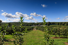 Wilklow Orchards (Jemlnlx) Tags: canon eos 5d mark 4 iv 5div 5d4 ef 1635mm f4 is usm wide angle lens zoom landscape nys ny new york state park hudson valley highland wilklow orchards apple picking farm fruit