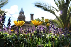 """"""" Mood For A Day """" (hope2029) Tags: town hall flowers palm tree bokeh clouds blue sky leeds west yorkshire"""
