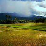 Chiang Mai Province. thumbnail