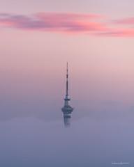City Fog (hakannedjat) Tags: auckland city fog cloudinversion nz newzealand sony sonynz a7rii sonya7rii sunrise skytower skycity