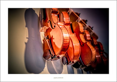 Me and my shadow (G. Postlethwaite esq.) Tags: dof sonya7mkii staffordshire timtoft beyondbokeh bokeh cellos depthoffield fullframe instruments mirrorless photoborder selectivefocus shadow strings violins