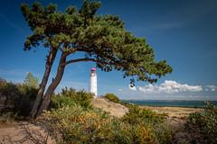 Leuchtturm - lighthouse - Hiddensee (Felix Ott) Tags: lighthouse leuchtturm baum tree rügen hiddensee dornbusch ostsee baltic sea sanddorn seabuckthorn mecklenburgvorpommern
