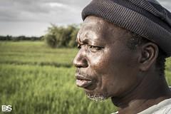La terre ne ment pas 12 (DS-Photographie) Tags: baguineda bamako mali culture riz agriculteur cultivateur perimètre irrigué autosuffisance alimentaire