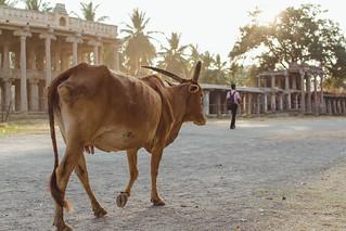 India-2018-8835